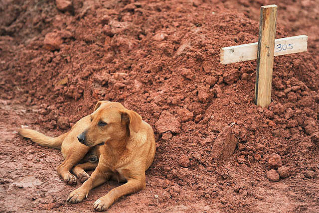 عکس سگ با وفا