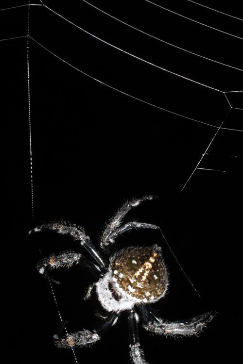 عکس: عجیبترین جاندارانی که در سال ۲۰۱۱ کشف شدهاند www.TAFRIHI.com