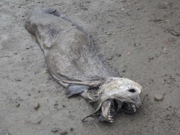 موجودات ترسناک دریا