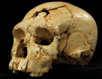 انتشار نخستین تصویر از جمجمه سه هزار ساله تهران اولین قتل تاریخ بشر درون 430 هزار سال قبل