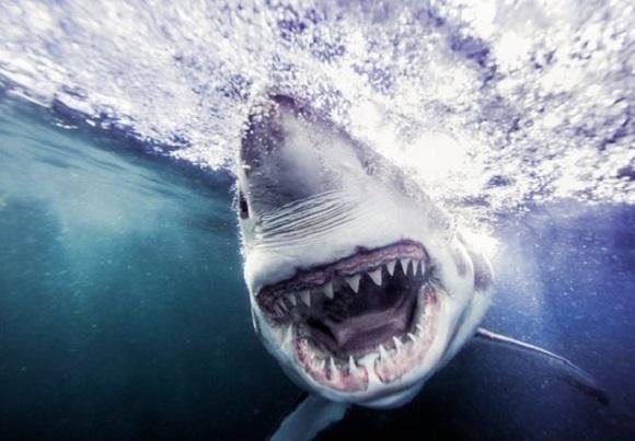 ثبت خطرناک ترین عکس جهان +تصاویر