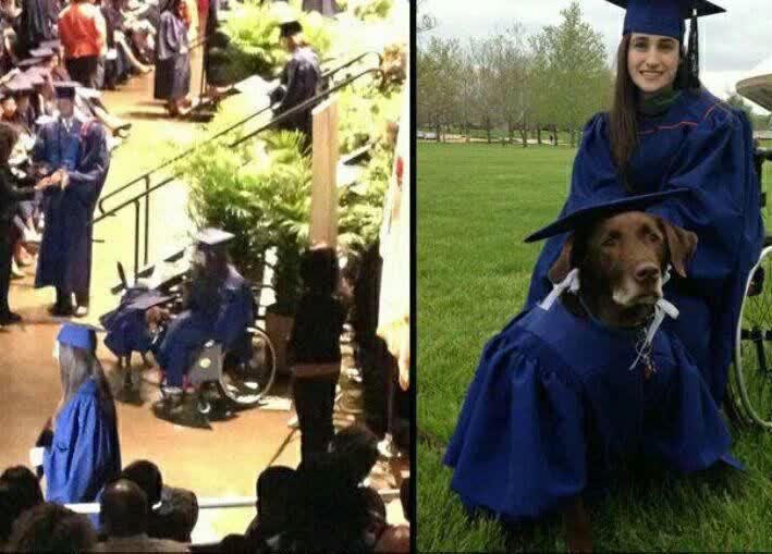 اولین سگی که مدرک کارشناسی گرفت +عکس