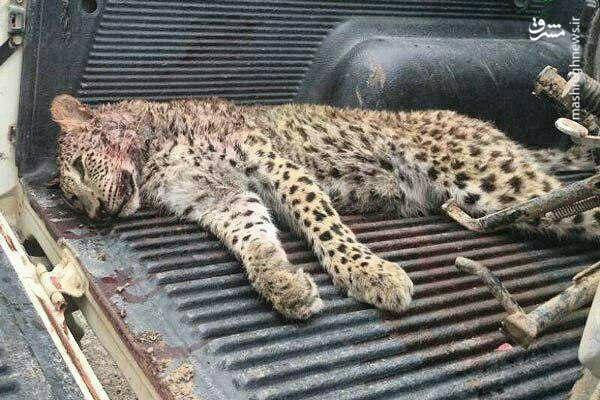 تصویری دردناک از حیات وحش در ایران