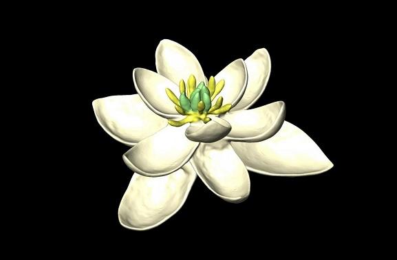 دانشمندان اولین «گل» جهان را بازسازی کردند +عکس