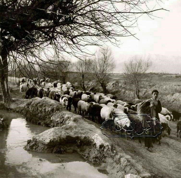 تصویری جالب و دیدنی از تهران در 100 سال پیش