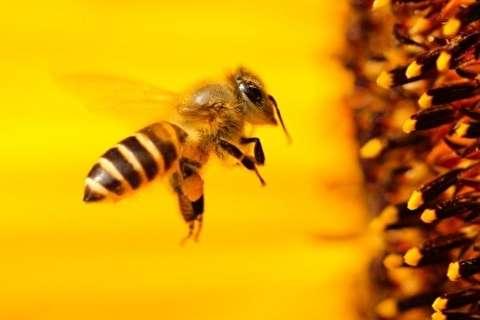چرا زنبورها از انسانها باهوشتر هستند؟ + فیلم