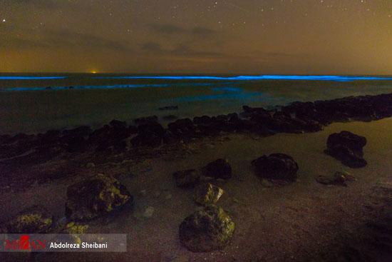 درخشش پلانکتونها در خلیج فارس +عکس