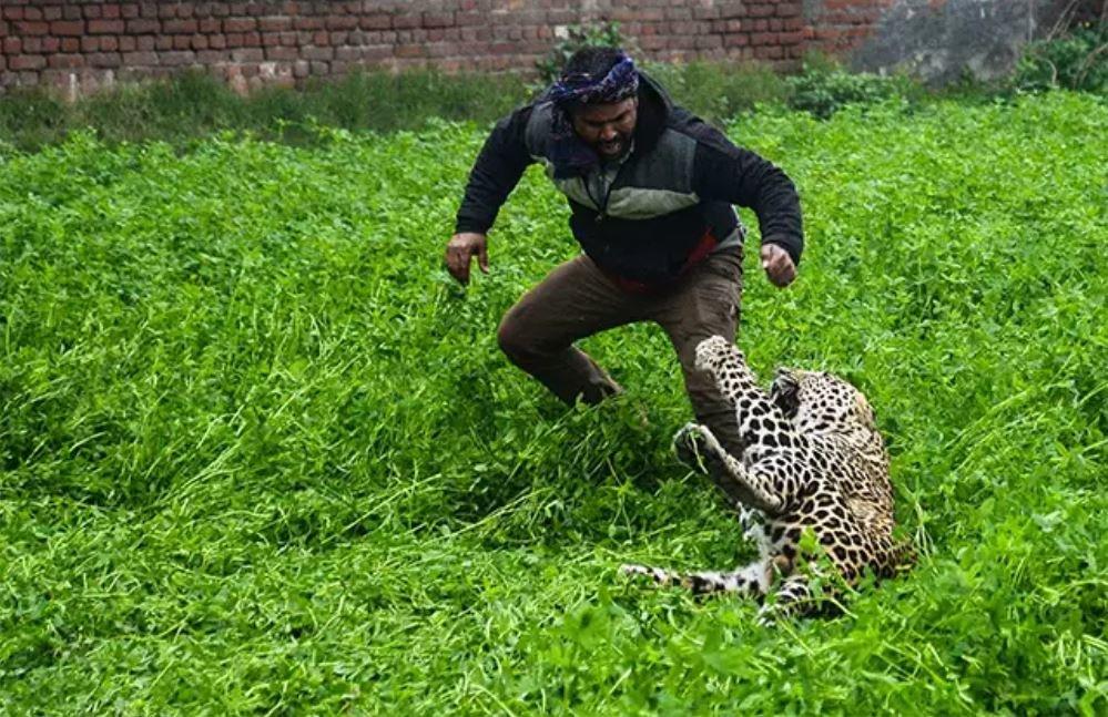 حمله پلنگ به مردم در هند +تصاویر