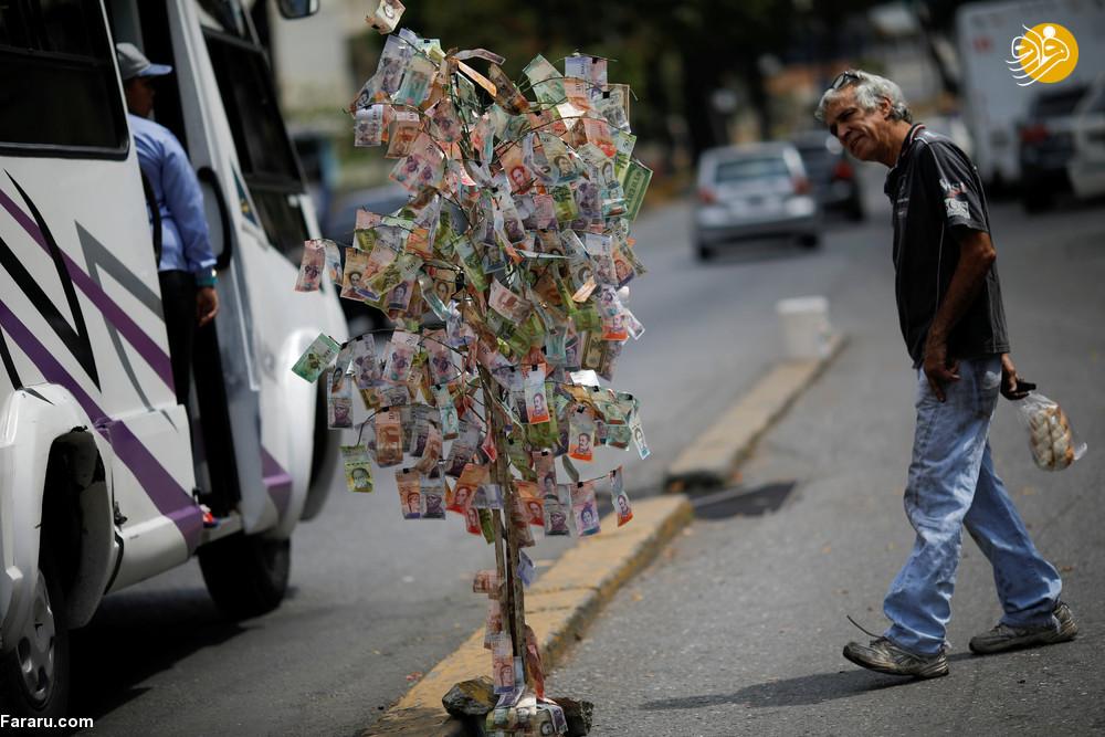 درخت پول در ونزوئلا! + عکس