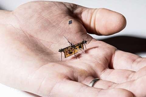 پرواز کوچکترین حشره وایرلس+فیلم