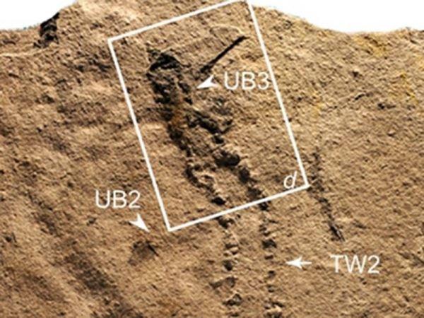 کشف قدیمیترین ردپای فسیل یک حیوان +عکس