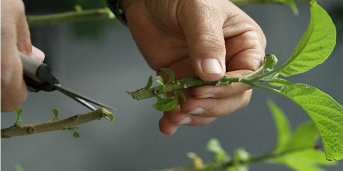 آشنایی با انواع روش های قلمه زدن گیاهان