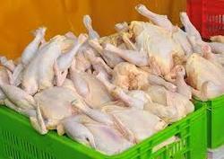 قیمت مرغ به 10 هزار و 600 تومان رسید