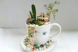باغچهای رویایی درون فنجان!