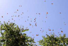 چرایی افزایش حشرات در استان تهران