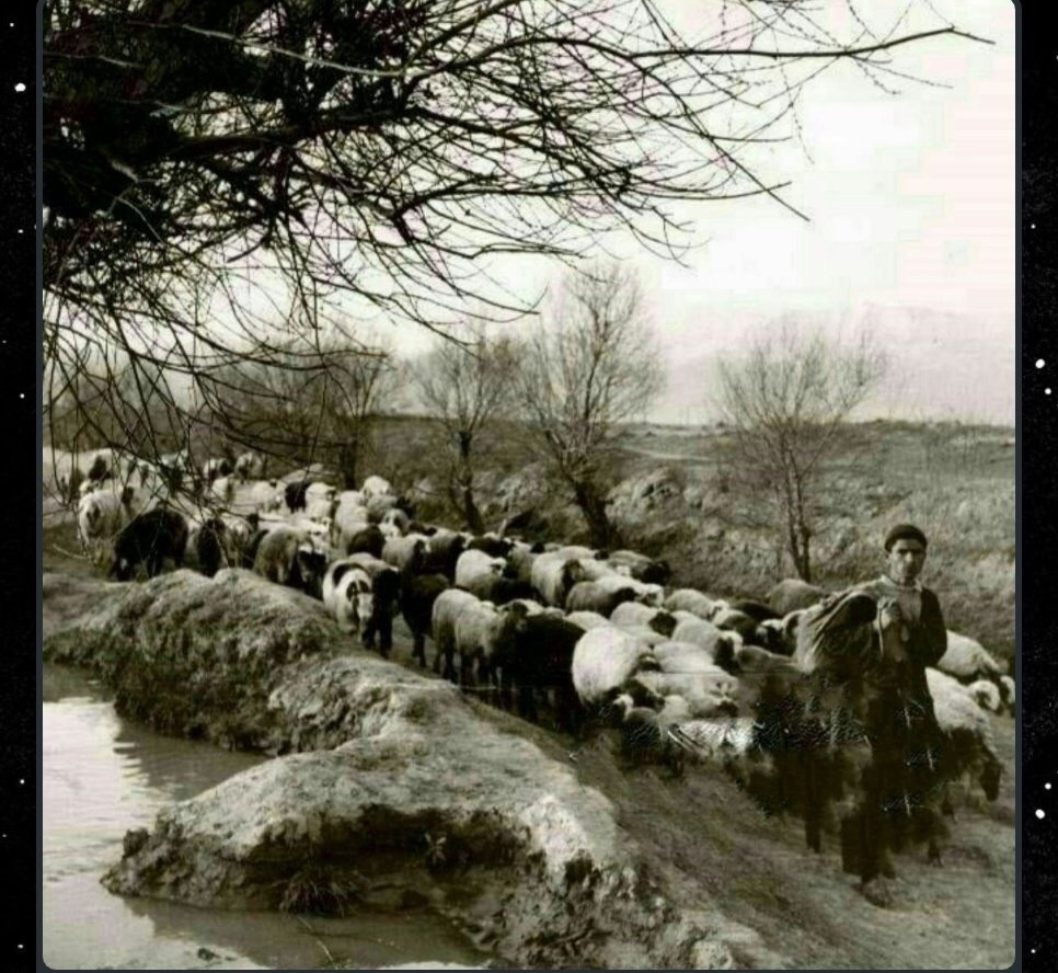 بلوار کشاورز تهران ۱۰۰ سال پیش+عکس