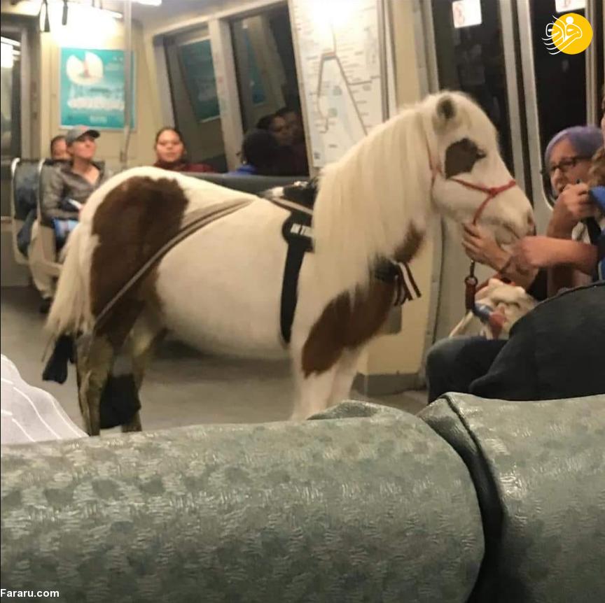 مسافری که با اسب سوار مترو شد! +تصاویر