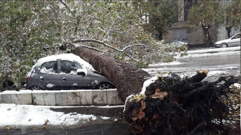 سقوط درخت روی خودرو در قیطریه+عکس