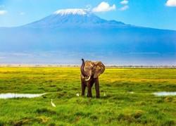 10 مورد از بهترین جاذبه های گردشگری تانزانیا در آفریقای شرقی