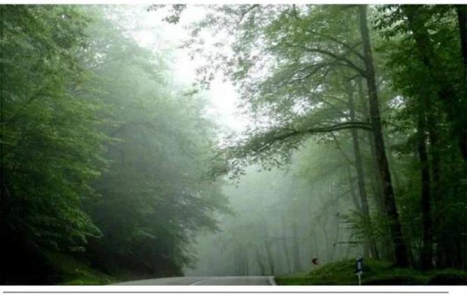 جنگلهاي دوهزار و سه هزار تنکابن کجاست؟عکس