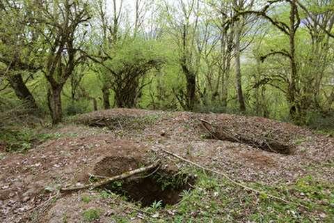 سودای گنج در جنگلهای هیرکانی