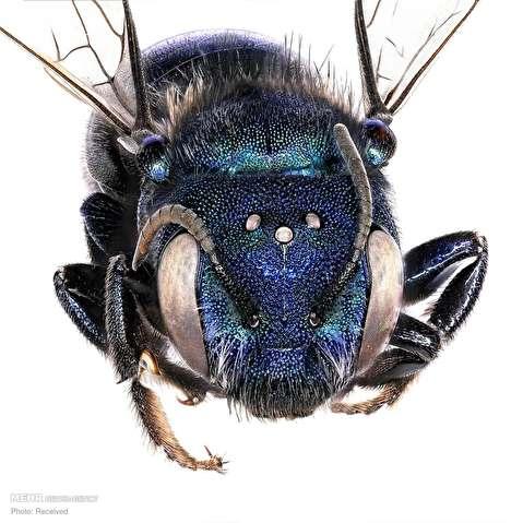 حشرات از نمای نزدیک