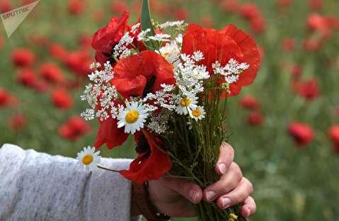 گل های زیبای شقایق در کریمه