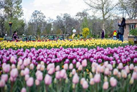 جشنواره گلهای لاله در اراک