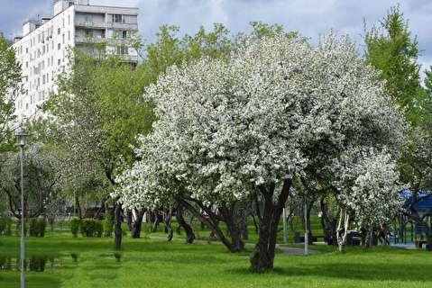 بهار فوق العاده جذاب در روسیه
