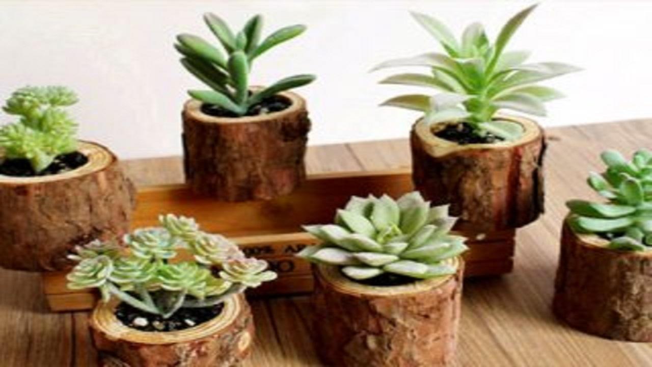 نکتههای مهم برای نگهداری گیاهان آپارتمانی
