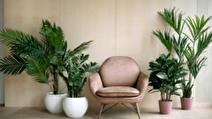 اصول مراقبت صحیح از گیاهان خانگی