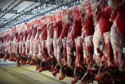 تولید گوشت قرمز ۱.۵ درصد کاهش یافت