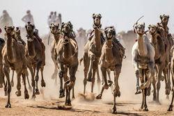 مسابقات شتردوانی در مصر