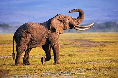 درسهای فیلها به آدمها + فیلم