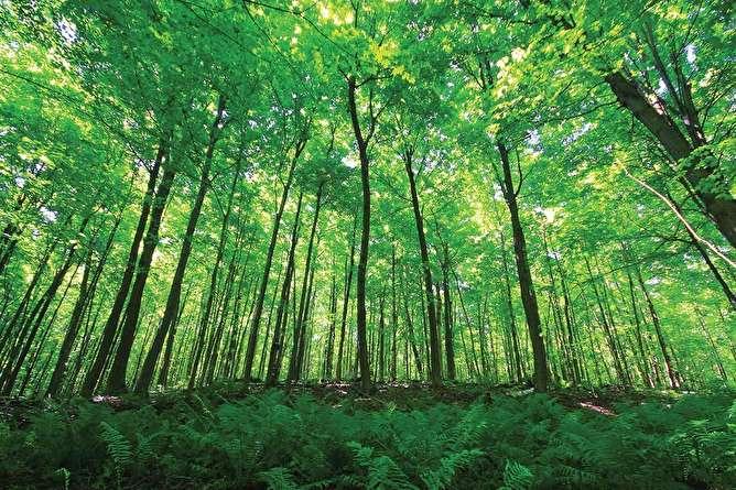 این جنگل جیغ میکشد + عکس