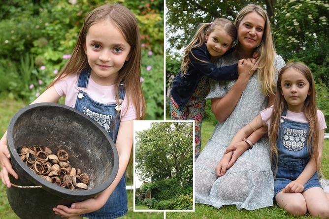حساسیت عجیب دختر ۶ ساله به درخت گردو