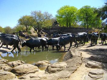 «راندن گله گاوها»، دالاس، تگزاس، ایالات متحده امریکا