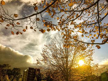 پاییز در شهر لیچفیلد انگلیس