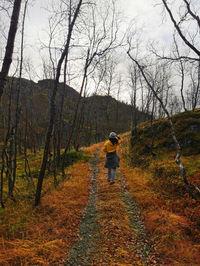 گردش در جنگل پاییزی در نروژ